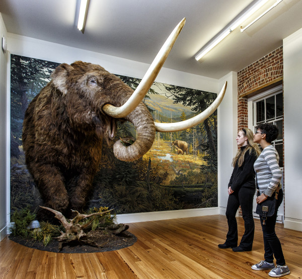 Winter Break Gallery Tour: Remember the Mastodon