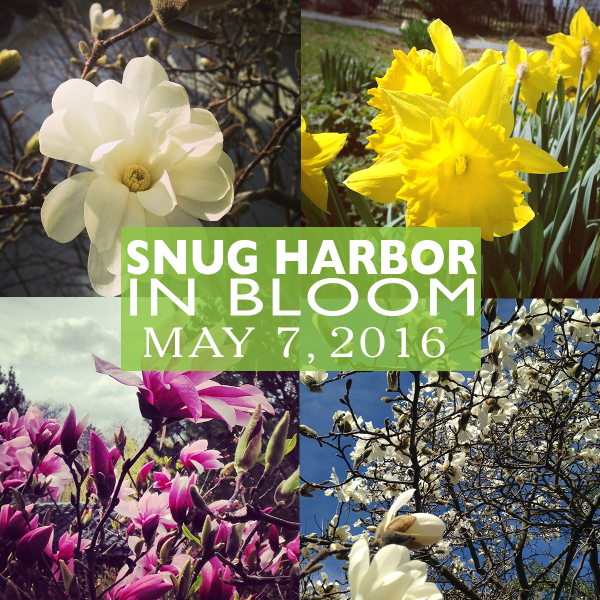 Harbor in Bloom