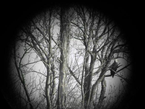 Staten Island Museum: Bird and Nature Walk: Great Kills Park