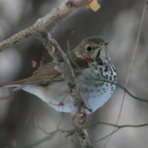 Staten Island Museum: Super Science Saturdays: Bird Walk