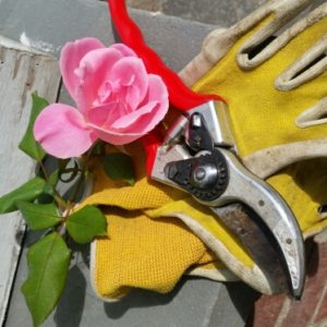 Winter Rose Pruning Workshop