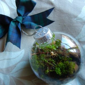 Staten Island Children's Museum: Second Saturday Science - Tiny Terrariums