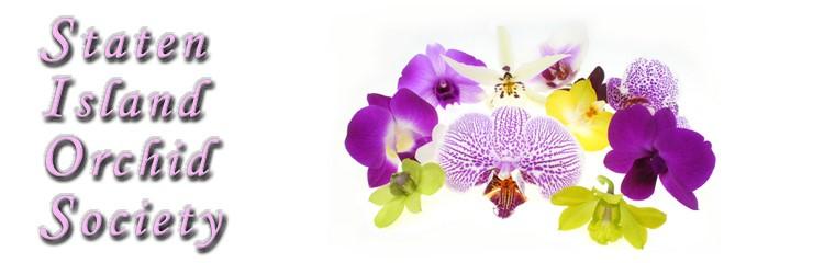 Orchid Show & Sale