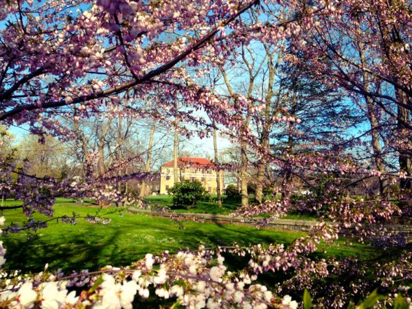 Spring Flowering Tree and Shrub Walk