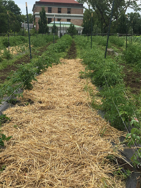 Soil Reboot: Compost & Green Manures (NYC Compost Project)