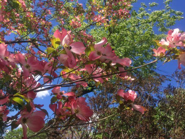 Spring Flowers Walk