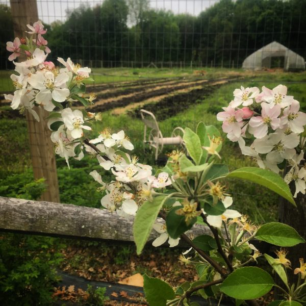 Snug Harbor Heritage Farm Tours: Spring Has Sprung