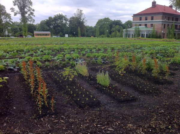 Fall Into Healthy Soil: Heritage Farm Workshop
