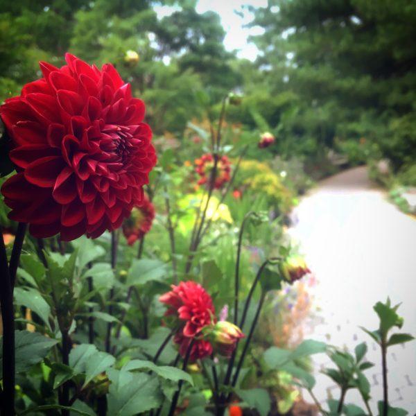 Luscious Tropical Plants: Garden Workshop
